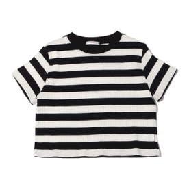 ボーダーリブミニTシャツ (WHITE)