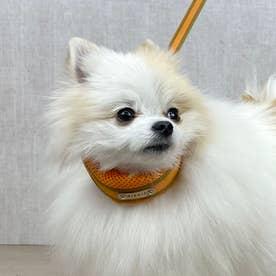 ラッセルクッションワンタッチカラー S 小型犬用首輪 (オレンジ) 【返品不可商品】