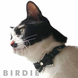 CATプチパールリボンカラー 猫用首輪 【返品不可商品】 (ブラック)