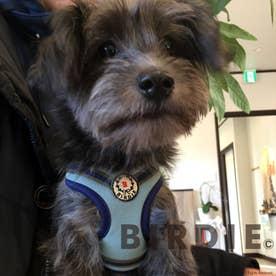 ローレルストライプソフトハーネス SS 小型犬用胴輪 【返品不可商品】 (ブルーグレー×ネイビー)