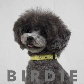 mimi pinson ティータイムカラー S 小型犬用ワンタッチバックル首輪 【返品不可商品】 (イエロー)