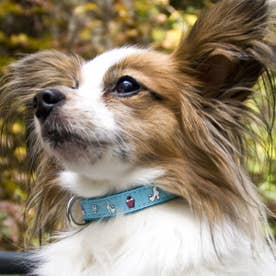 mimi pinson ティータイムカラー S 小型犬用ワンタッチバックル首輪 【返品不可商品】 (ブルー)