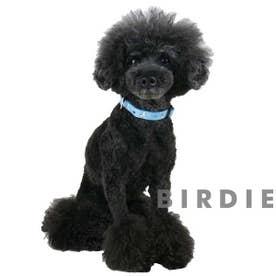 mimi pinson ティータイムカラー M 中型犬用ワンタッチバックル首輪 【返品不可商品】 (ブルー)