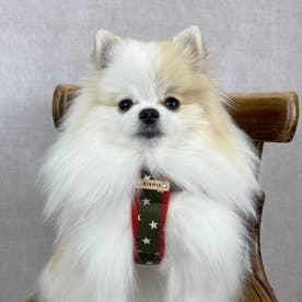 スターデニムクッションハーネス SS 小型犬用胴輪 (カーキレッド)【返品不可商品】