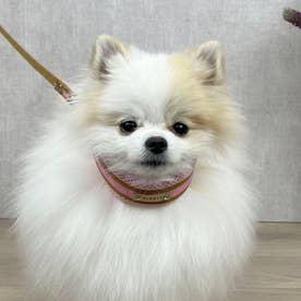 ラッセルクッションワンタッチカラー S 小型犬用首輪 (ピンク)【返品不可商品】