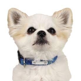 モノグラムカラー S 小型犬用ワンタッチバックル首輪 【返品不可商品】(ブルー)
