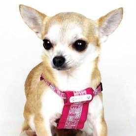 モノグラムハーネス SS 小型犬胴輪 【返品不可商品】 (ピンク)