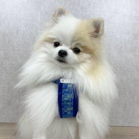 モノグラムハーネス SS 小型犬胴輪 【返品不可商品】 (ブルー)