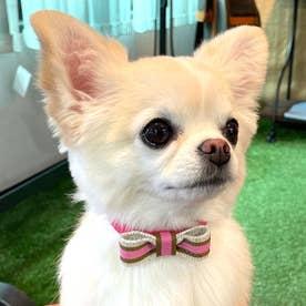 スープルリボンカラー 21 小型犬ウルトラスエード首輪 【返品不可商品】(ピンク)
