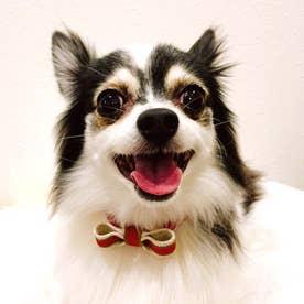 スープルリボンカラー 25 小型犬ウルトラスエード首輪 【返品不可商品】(レッド)