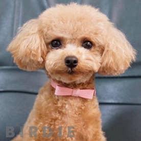 リボンステッチカラー 25 小型犬・猫用革首輪 (ピンク)【返品不可商品】