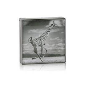 アイシャドウ ルミネッセント アイシェード - # Giraffe (バーンニッシュ ブラウン)