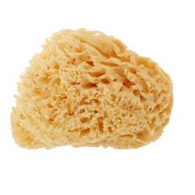 天然海綿ハニコム種 袋パッケージ (Lサイズ(14から16cm))